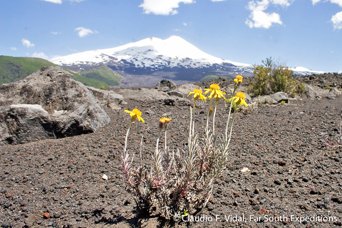 Llaima Volcano, Conguillio National Park, Chile © Claudio F. Vidal, Far South Expeditions