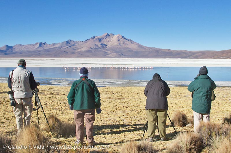 Salar de Surire, a fantastic location where you can finds the best sample of High Andean bird specialties