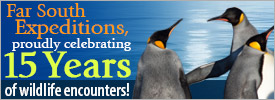 Far South Expeditions, proudly celebrating 15 years of wildlife encounters!
