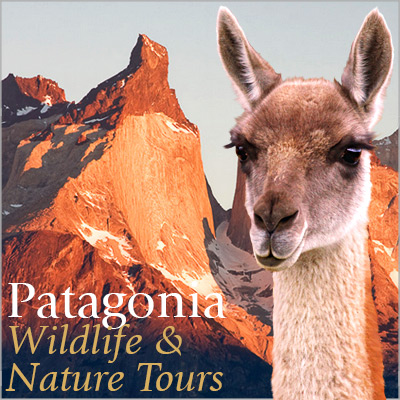 Patagonia Wildlife & Nature Tours