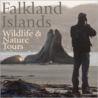 Falkland Islands Wildlife & Nature Tours