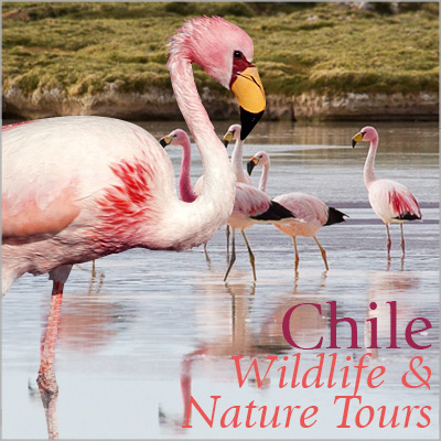 Chile Wildlife & Nature Tours