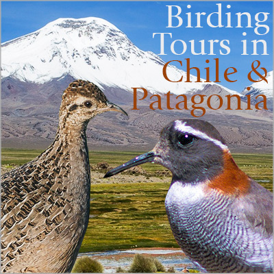 Birding Tours in Chile & Patagonia