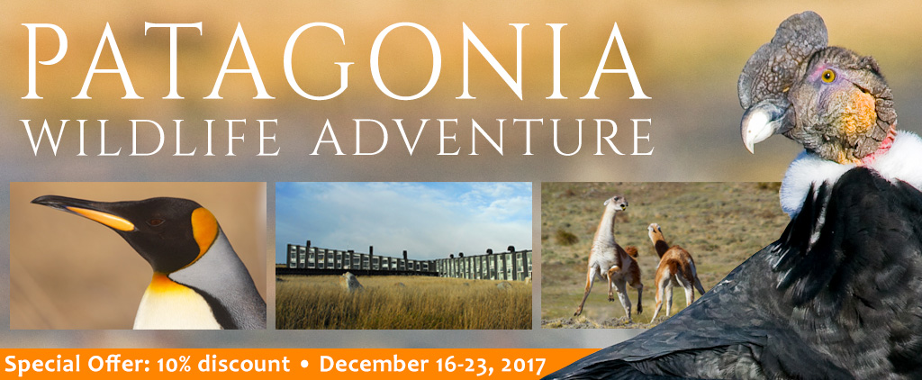 Patagonia Wildlife Adventure - Special Offer