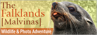The Falkland Islands, A Photo Wildlife Adventure