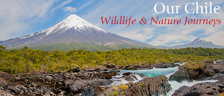 Our Chile Wildlife & Nature Journeys