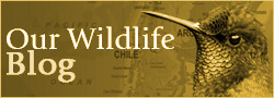 Our Wildlife Blog