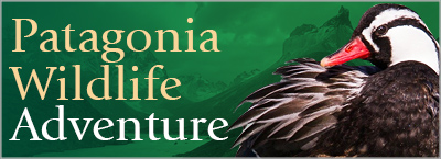 Patagonia Wildlife Adventure, A Nature Journey to the End of the World
