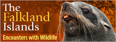 The Falkland Islands: Encounters with Wildlife © Far South Expeditions