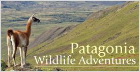 Patagonia Wildlife Adventures with Far South Expeditions