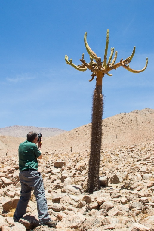 Photographing the majestic Chandelier cactus, Browningia candelaris © Claudio F. Vidal, Far South Expeditions
