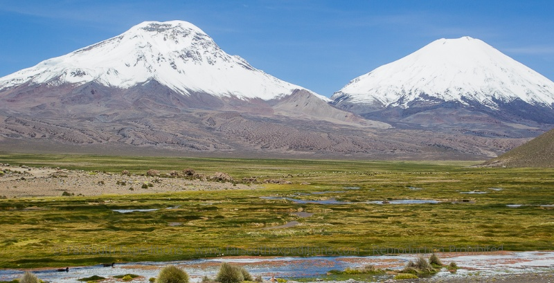 The Payachatas, the 'twin volcanoes', Parinacota and Pomerape from the scenic Bofedal de Caquena © Claudio F. Vidal, Far South Expeditions