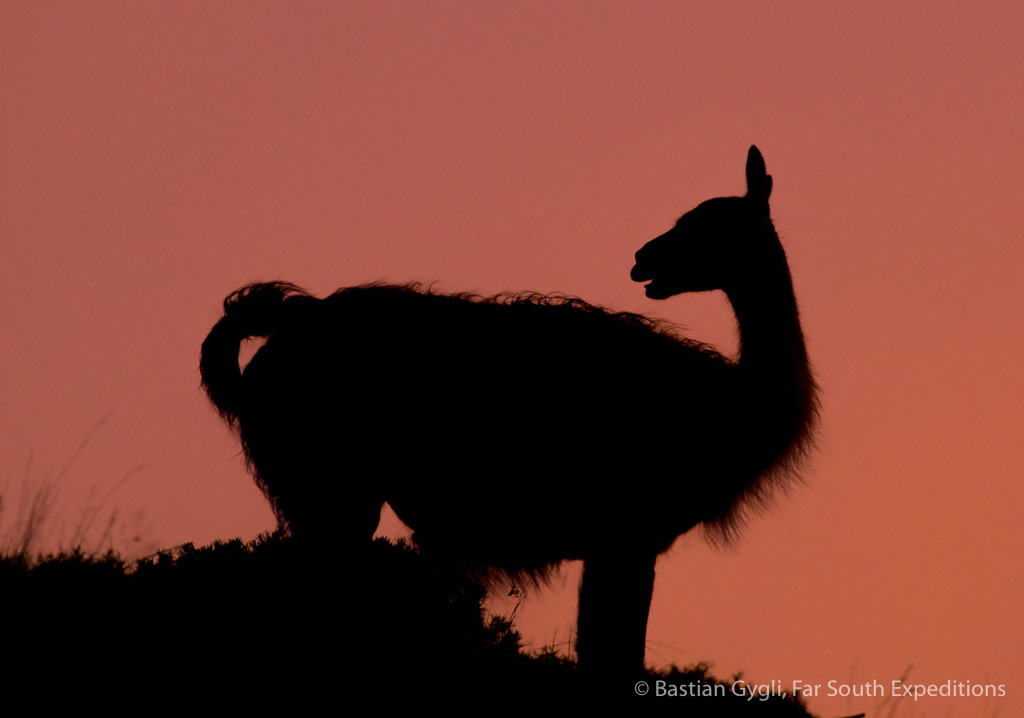 Guanaco silhouette, Torres del Paine NP, Chile © Bastian Gygli, Far South Exp
