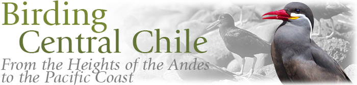 Birding Central Chile - From the Heights of the Andes to the Pacific Coast