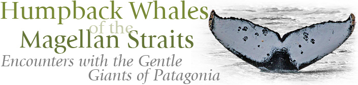 Humpback Whales of the Magellan Straits, Encounters with the Gentle Giants of Patagonia